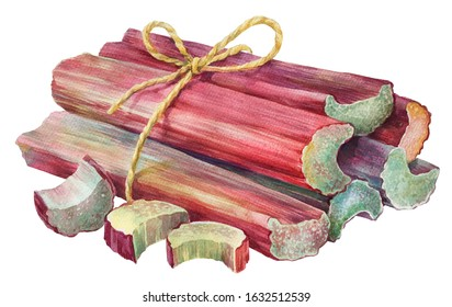 Watercolor illustration  Rhubarb isolated on white background