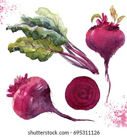 Watercolor illustration of root beet, leaves of chard, slice of beetroot, set of vegetables