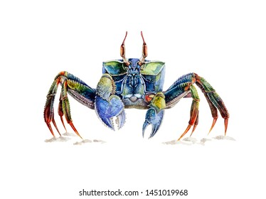 Watercolor illustration of a sea crab standing on the sand. Multi colored well drawn crab - ocean underwater animal, isolated on white background.