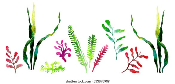 Watercolor illustration of seaweed. View of undersea life isolated on white background. Hand drawn.