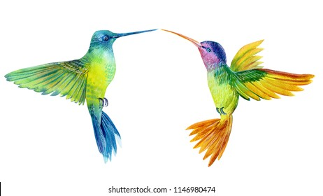 watercolor illustration, set beautiful tropical bird,  two birds hummingbirds in isolated white background