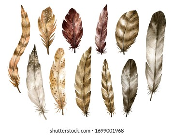 Watercolor illustration set with bird feathers. Hand painting isolated elements in vintage style. Boho nature elements for home decor, scrapbooking, prints, texture