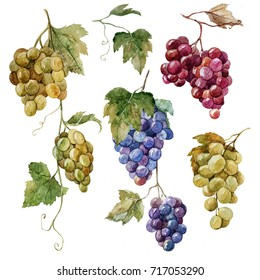 Watercolor illustration of a set of bunches of grapes, white, red, blue grapes