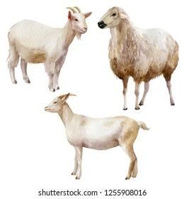 Watercolor illustration, set. Farm animals sheep goats