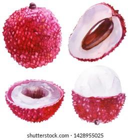 Watercolor illustration, set. Lychee. Lychee fruit, half lychee, cut off part lychee.