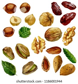 Watercolor illustration, set. Nuts, hazelnut, pistachios walnut almond and date fruit