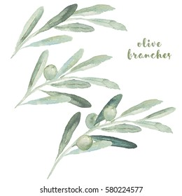 Watercolor illustration with set of olive branches