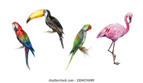 Watercolor illustration set of tropical  birds. Toucan, scarlet macaw parrot and green Alexandrine parrot. Pink flamingo bird drawing.