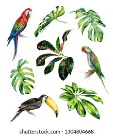 Watercolor illustration set of tropical leaves and birds. Toucan, scarlet macaw parrot and green Alexandrine parrot. Monstera leaves, schefflera or dwarf umbrella tree, croton plant painting.