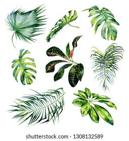 Watercolor illustration set of tropical leaves. Monstera leaves, schefflera or dwarf umbrella tree, croton plant painting. Coconut palm leaves. Dense jungle. Banner with exotic summertime motif.