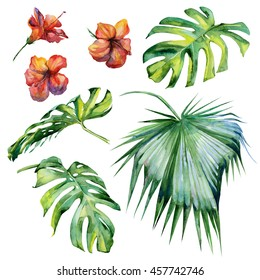 Watercolor illustration set of tropical leaves, dense jungle. Hand painted. Banner with tropic summertime motif may be used as background texture, wrapping paper, textile or wallpaper design