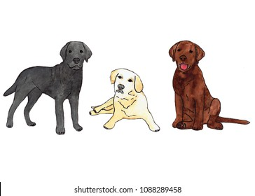 Watercolor illustration of small labradors. Hand drawn picture. Isolated on white background.