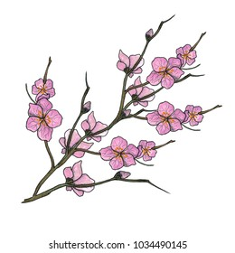 Watercolor illustration of spring bloom branch with pink flowers, buds. Realistic design isolated on white. Blooming cherry tree twigs, blossom collection. Apple, peach or apricot flowering branches.