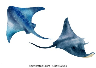 Watercolor illustration of stingrays on a white background. Realistic underwater wild animal. Hand drawn