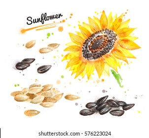 Watercolor illustration of sunflower, pile of seeds peeled and unpeeled and paint smudges and splashes.