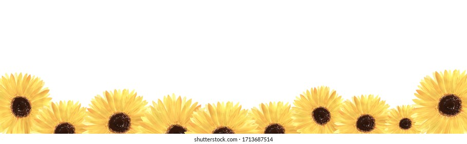 Watercolor illustration of sunflowers.Horizontal border of isolated flowers on a white background.