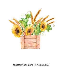 Watercolor illustration. A template of sunflowers, vines and ripe wheat. Autumn bouquet in a wooden box.
