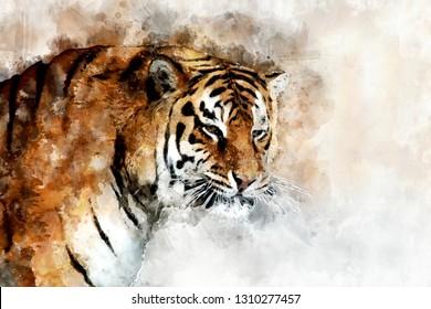 Watercolor illustration tiger portrait. Beautiful wildlife world