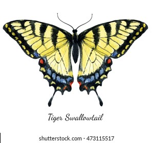 Watercolor  Illustration Tiger Swallowtail butterfly,isolated image