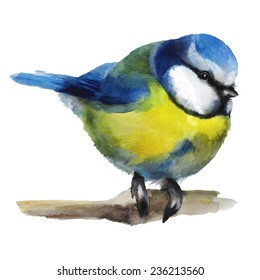 Watercolor illustration with a titmouse on a branch. Hand drawn illustration