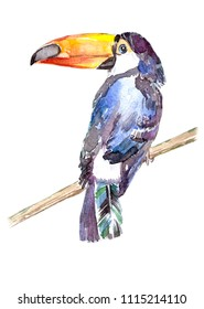 watercolor illustration of toucan sitting on a branch