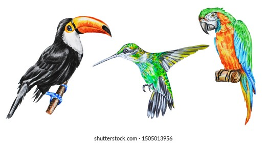 Watercolor illustration of tropical birds: toucan, parrot and hummingbird on a white background.