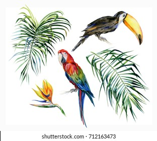 Watercolor illustration of tropical leaves, dense jungle. Toucan bird and scarlet macaw parrot.Strelitzia reginae flower. Hand painted. Banner with tropic summertime motif. Coconut palm leaves.