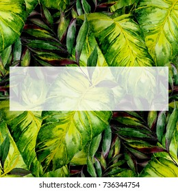 Watercolor illustration of tropical leaves, dense jungle. Hand painted. Banner with tropic summertime motif may be used as wedding or greeting card. Invitation template. Holiday or birthday greeting