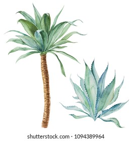 Watercolor  illustration. Tropical palm tree.