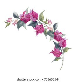 Watercolor illustration of a tropical purple bougainvillea flower, a branch with flowers and leaves