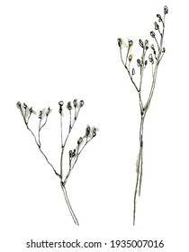 Watercolor illustration of twig with a muted color, black-and-white sketch made by hand. Elegant dried flowers on a white background.