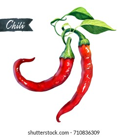 Watercolor illustration of two fresh chili peppers isolated on white background with clipping path included