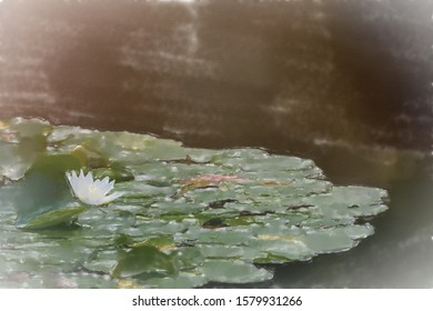 watercolor illustration: Water lily field with a white flower of a water lily, with intentional sunspots and overexposure in backlighting, plant