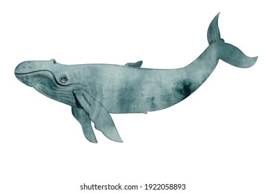 Watercolor illustration of the whale on white background