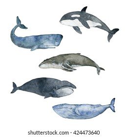Watercolor Illustration Whale the white background.Sperm.Grampus.Gray whale.Polar whale.Blue whale