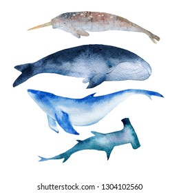 Watercolor illustration of whales narwhal, blue whale, beluga, shark. Wild animals on a white background. Hand drawn