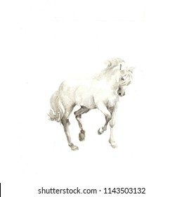 watercolor illustration white horse isolated on the white background
