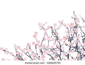 Watercolor illustration with wild pink flowers over a white background