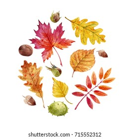 Watercolor illustration of yellow and red autumn leaves, Birch leaves, mountain ash,maple, oak. acorns, chestnuts and nuts. set of isolated objects