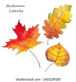 Watercolor illustration of yellow, red and green autumn leaves. Forest design elements. Hand drawn.
