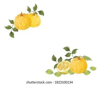 Watercolor illustration of yuzu fruits decoration
