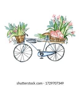 Watercolor illustration.Blue bicycle with flower baskets and a shovel.