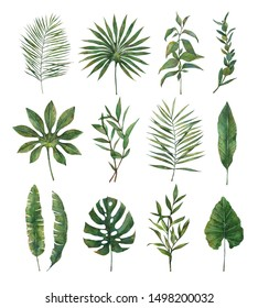 Watercolor illustration.Botanical set with green leaves, herbs, eucalyptus, fern and tropical leaves .Watercolor illustrations perfect for wedding invitations,stickers, greeting cards, posters, prints