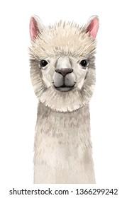 Watercolor illustrations of cute animal portrait, lama head