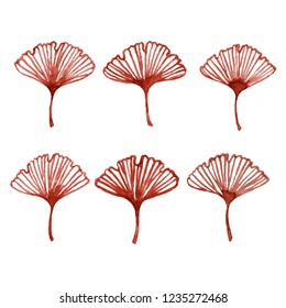 Watercolor illustrations. Ginkgo tree leaves set isolated on white background.