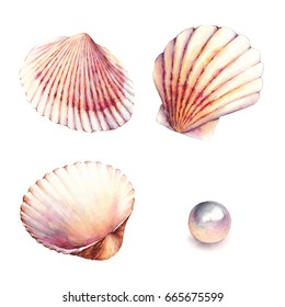 Watercolor illustrations of shells. Bottom of the sea. Nautical elements, sea shells, pearl, isolated on white background