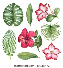 Watercolor illustrations of tropical flora