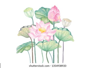 Watercolor illustrations, two pink lotus clumps are blooming on the White Blackground.Waterlily flower for worshiping Buddha in Buddhism.