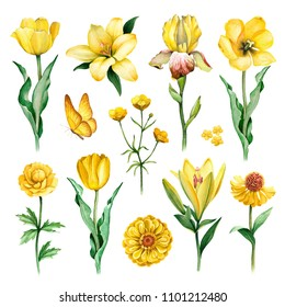 Watercolor illustrations of yellow flowers