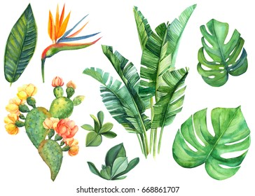 watercolor illustrations.Succulents, Blossoming cactus, strelitzia, tropical palm leaves, monstera, jungle leaves set isolated on white background